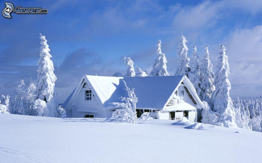 snöig stuga, snöklädda träd, snö