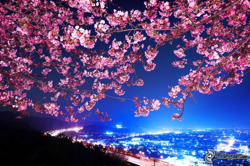 blommande träd, nattstad