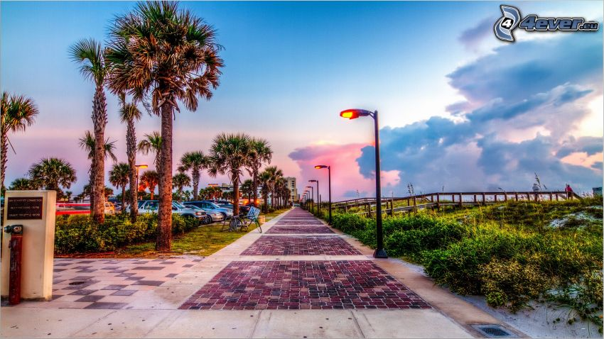 Jacksonville, trottoar, gatlyktor, palmer