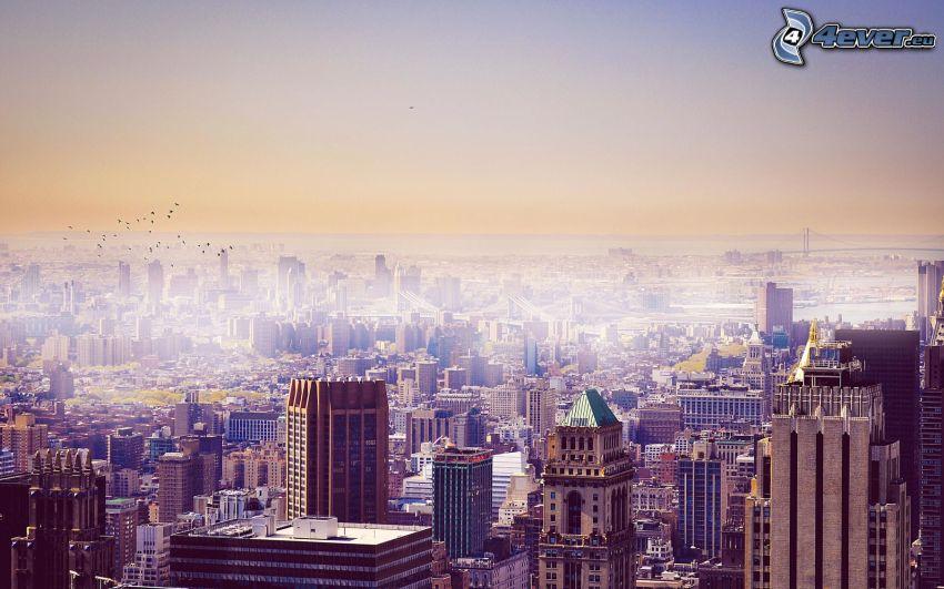 New York, dimma