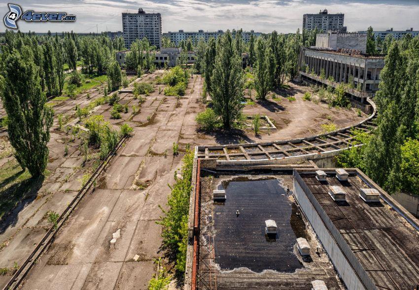 Pripyat, torg, träd