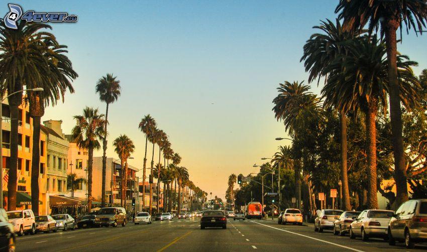 Santa Monica, gata, palmer