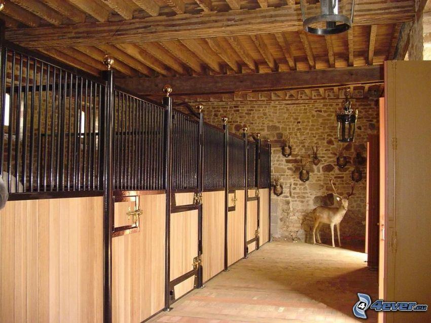 stall, hjort
