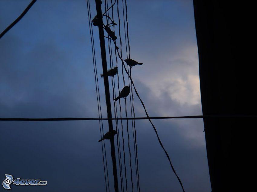 ståltrådar, elledningar, fåglar