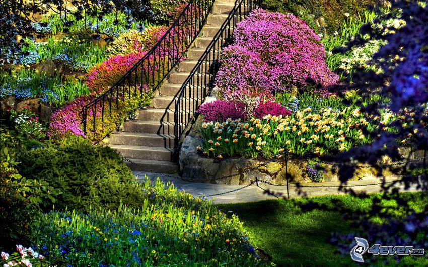 trappor, färgglada blommor