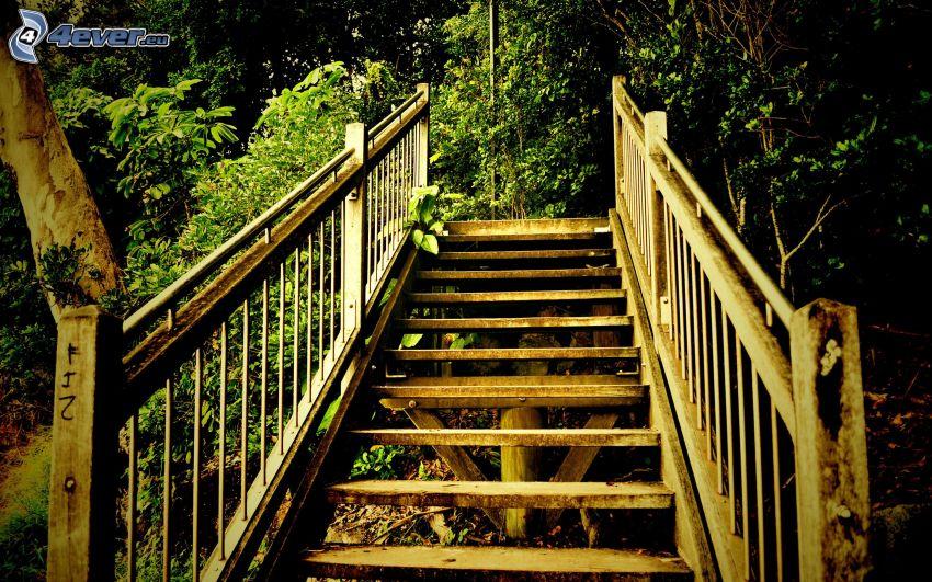 trappor, skog