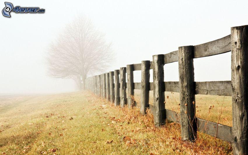 trästaket, äng, dimma