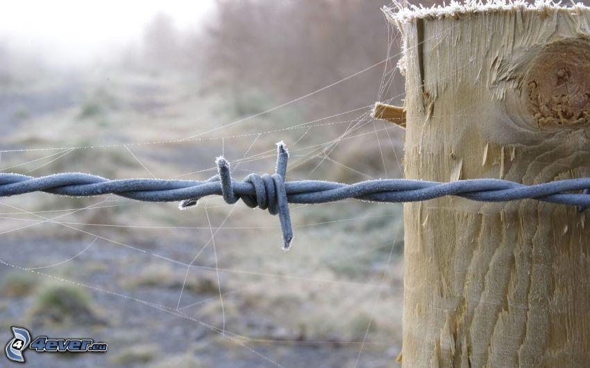 trästaket, taggtråd