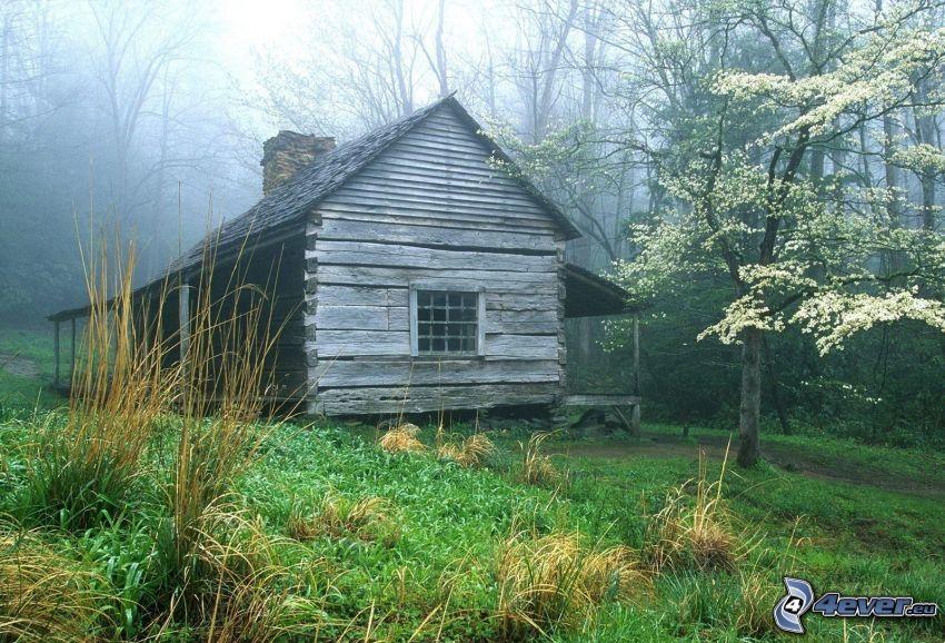 trästuga, gräs, dimma