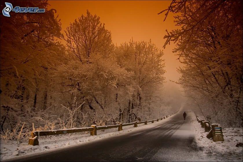 vinterväg, snöig skog
