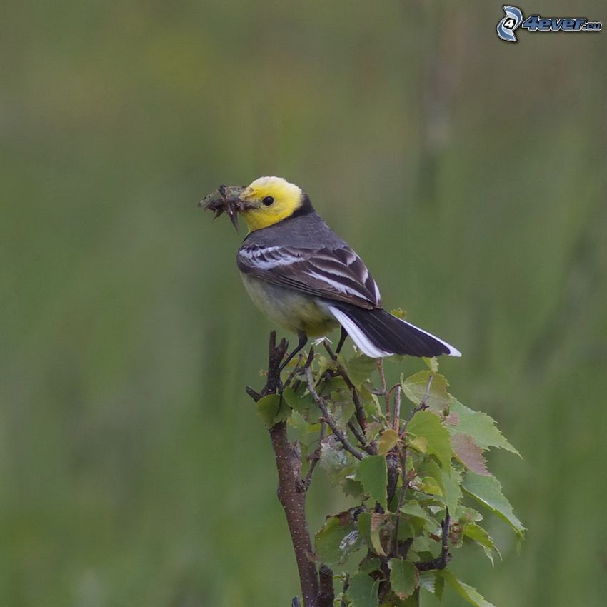 fågel, buske