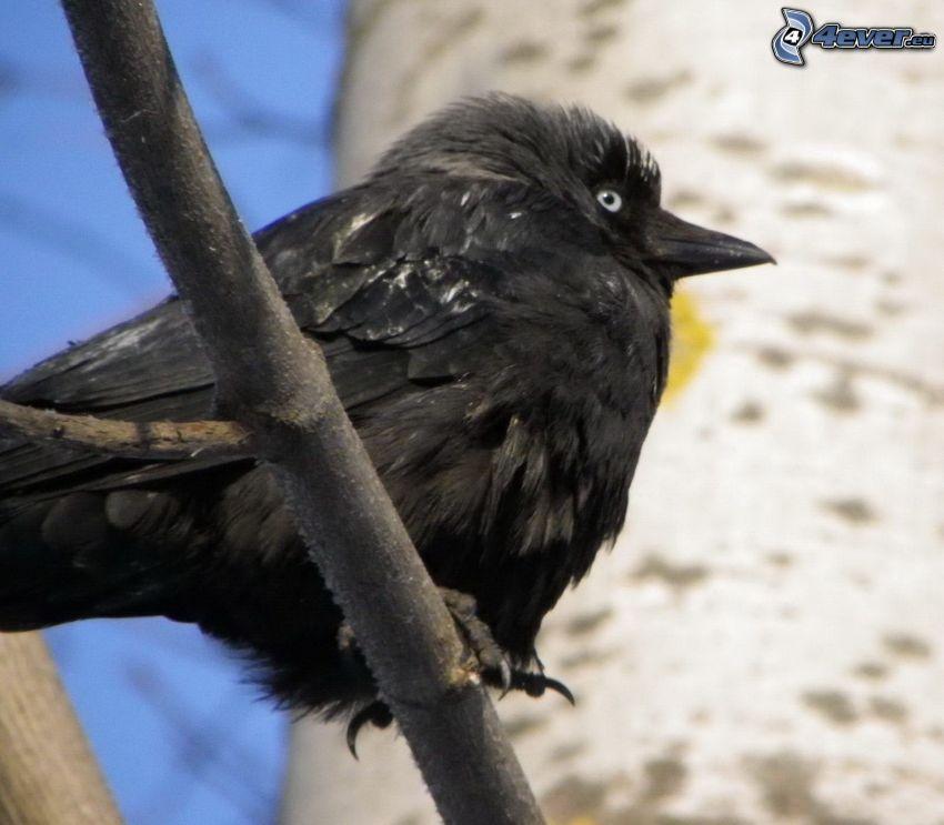 fågel, gren