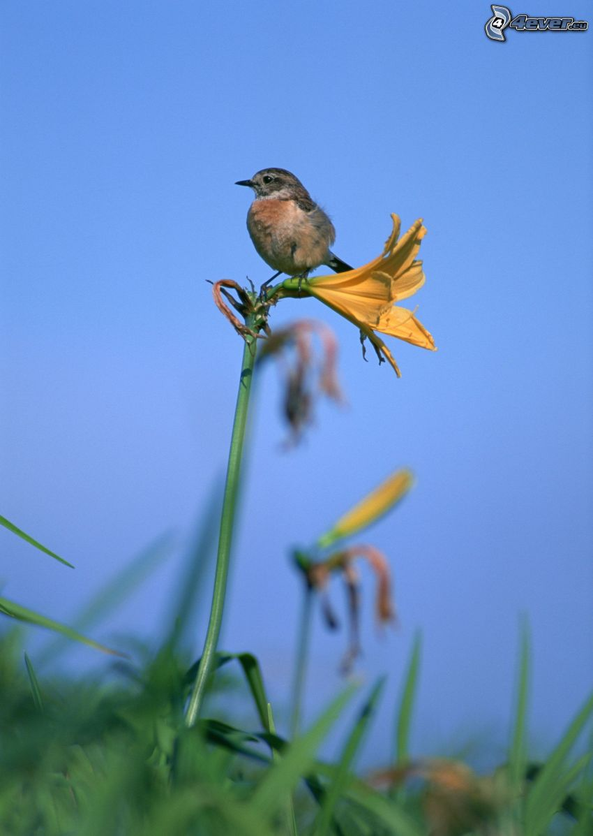 fågel, gul blomma