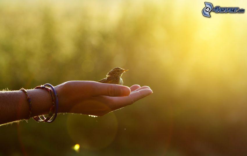fågel, hand, armband