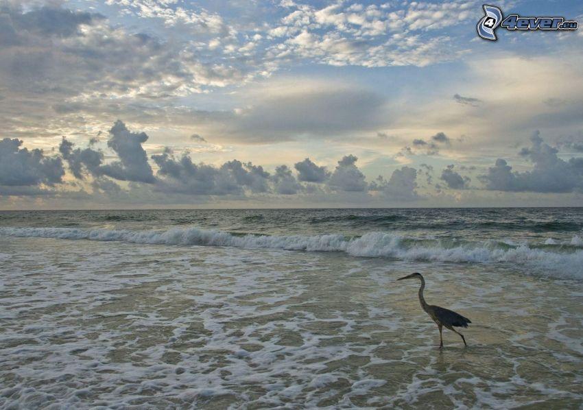 fågel, hav, skum, moln
