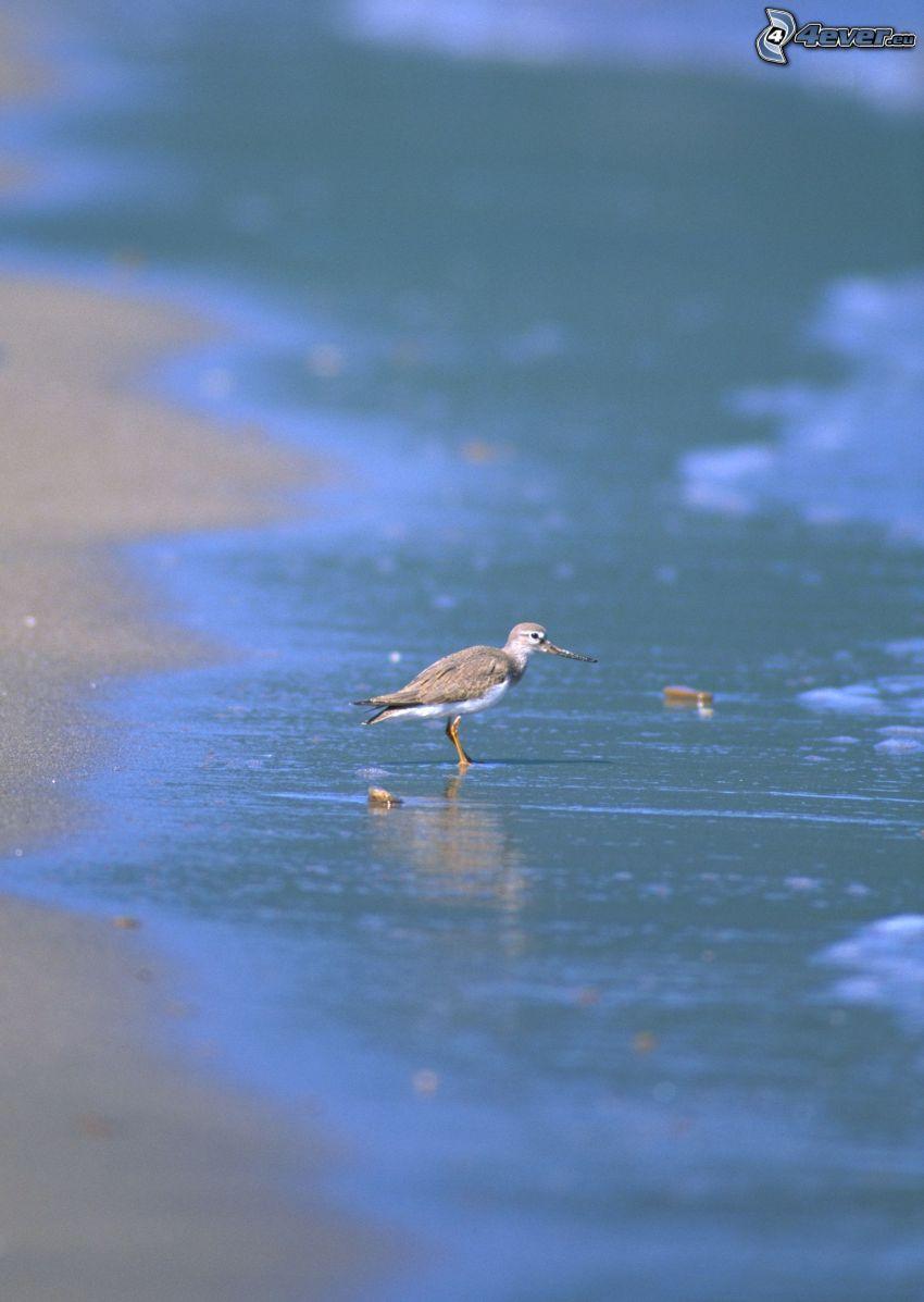 fågel, hav