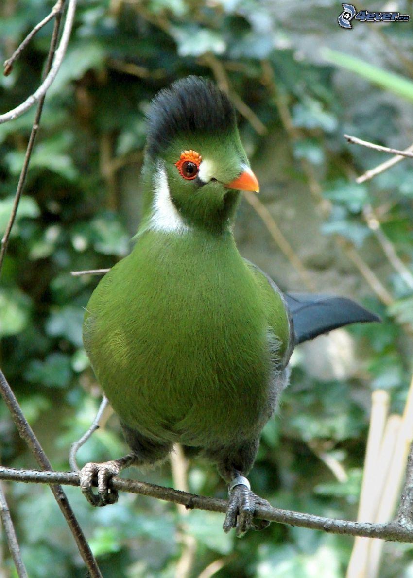 fågel, kvist