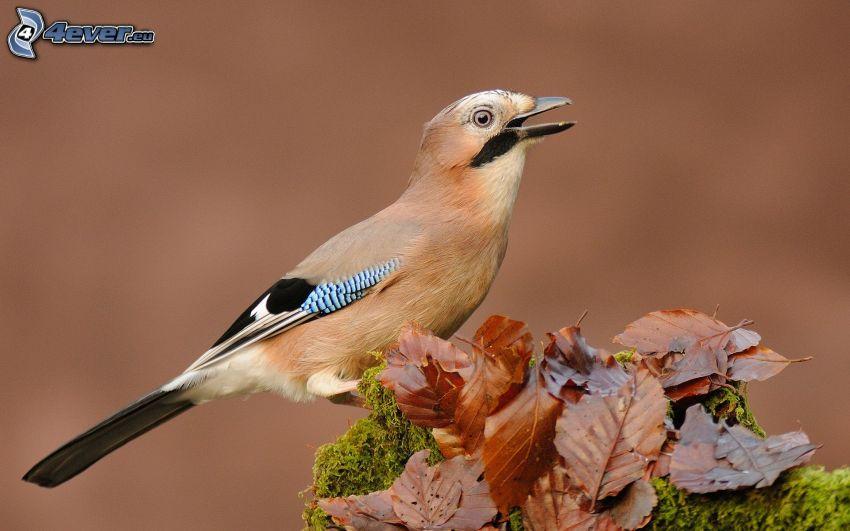 fågel, nedfallna löv