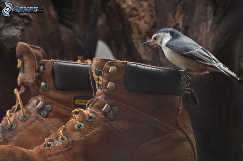 fågel, skor
