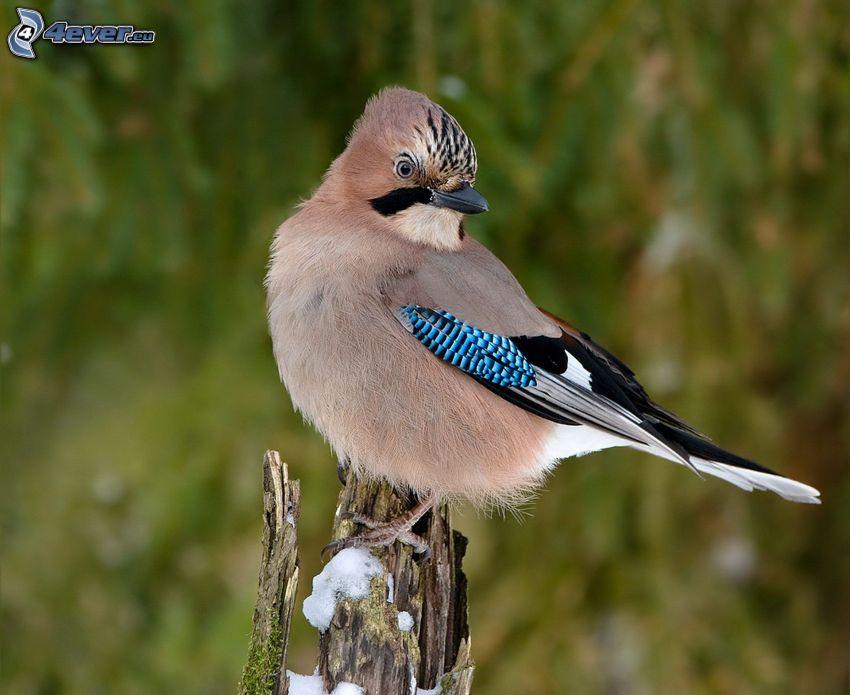fågel, trä, snö