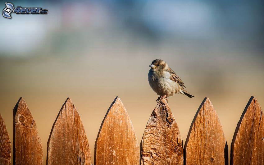 fågel, trästaket