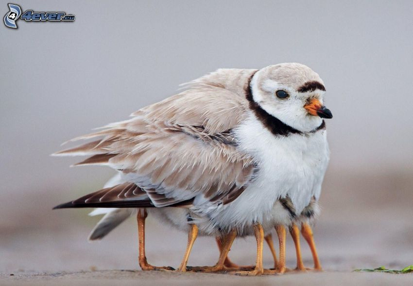 fågel, ungar, ben