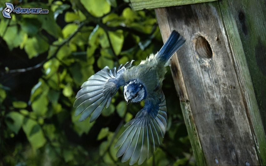 fågel, vingar, flyg, fågelholk