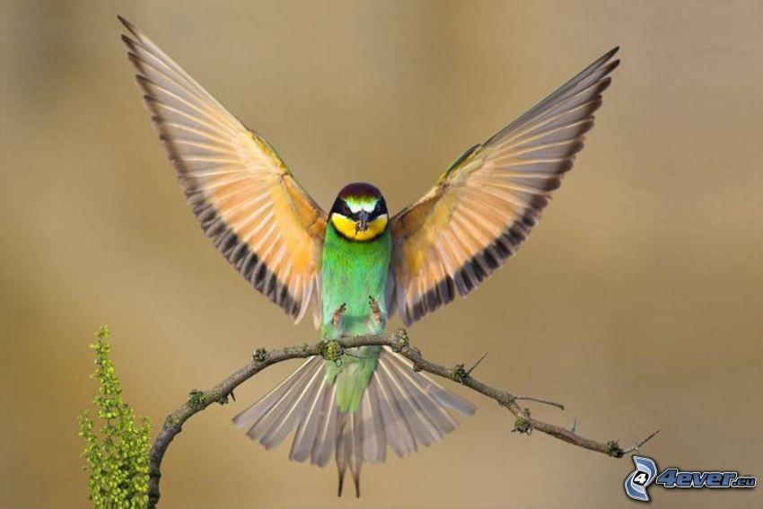 fågel, vingar, kvist