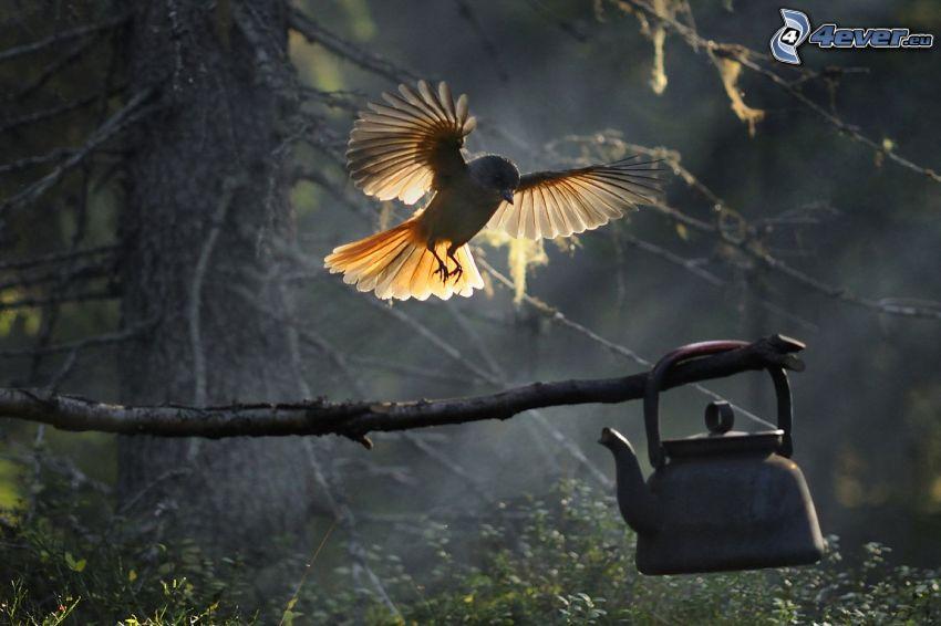 fågel, vingar, landning, gren, vattenkokare