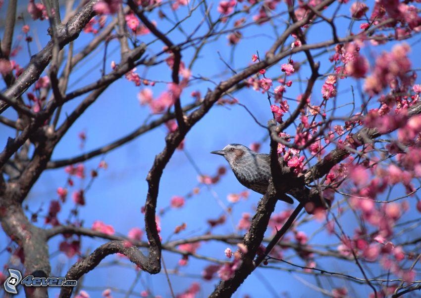 fågel på gren, blommande träd