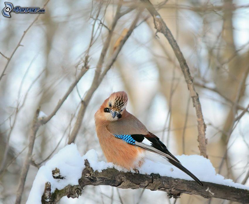 fågel på gren, snö