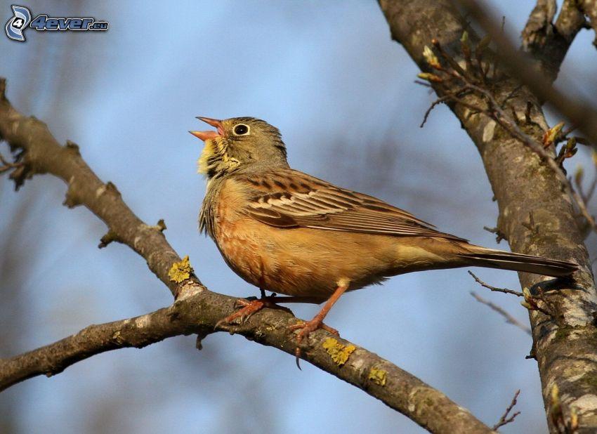 fågel på gren