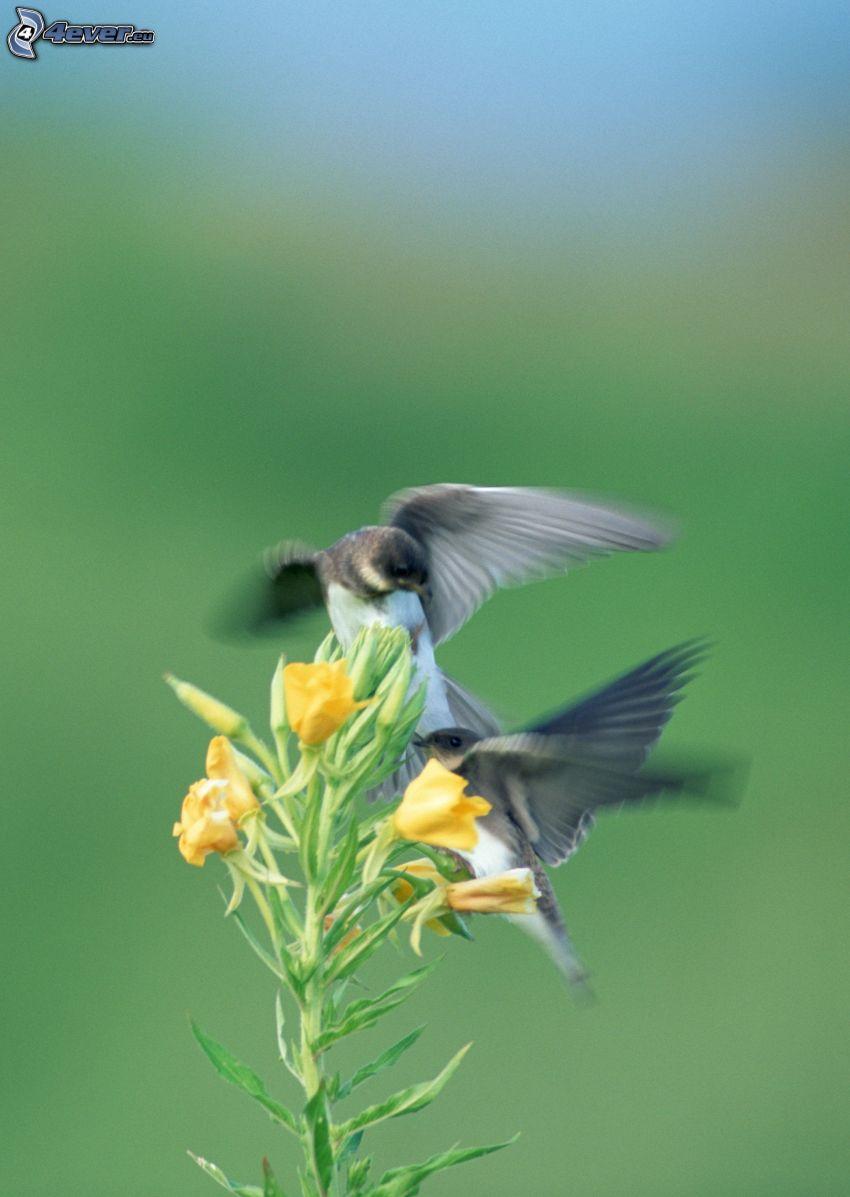 fåglar, par, gul blomma