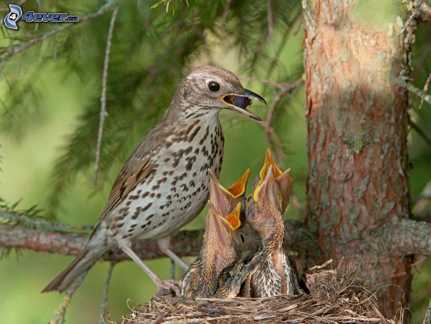 fåglar, ungar, matning