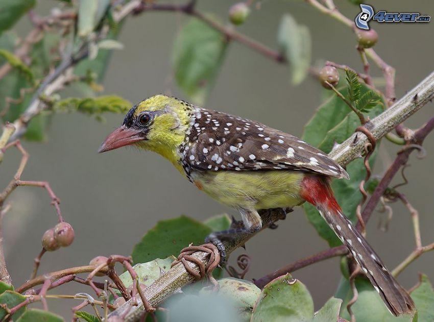 färggrann fågel, gren