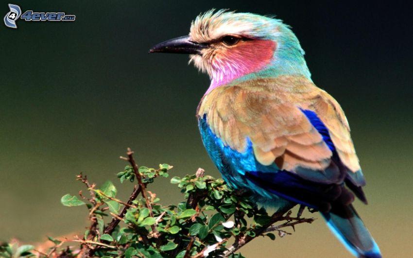färggrann fågel