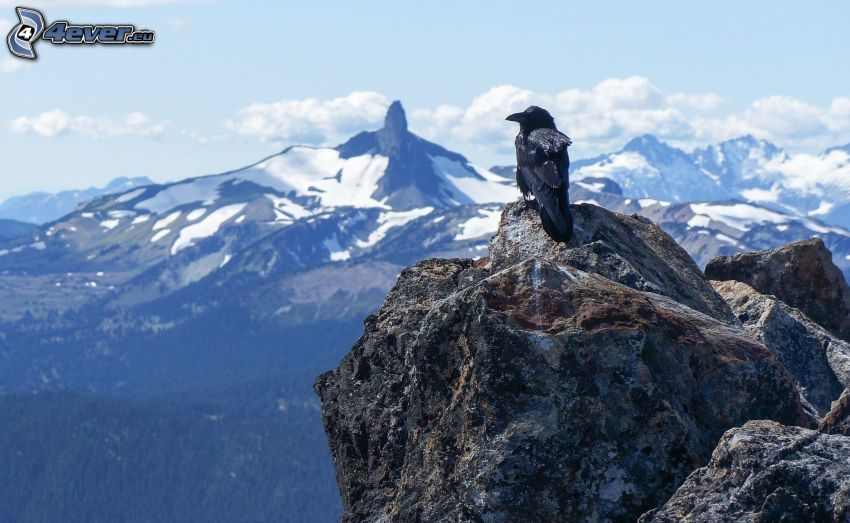 korp, klippa, snöklädda berg, utsikt över landskap