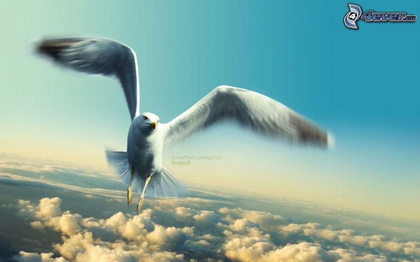 mås, flyg, vingar, ovanför molnen