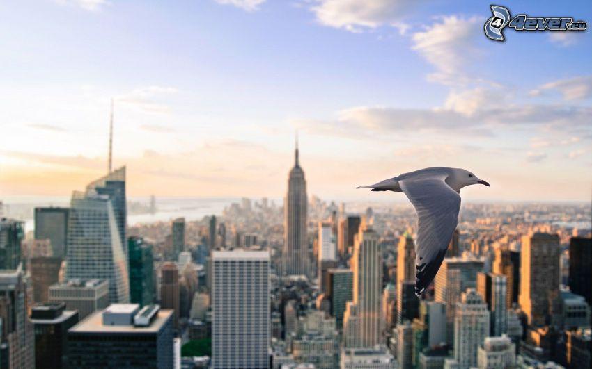 mås, New York, Empire State Building