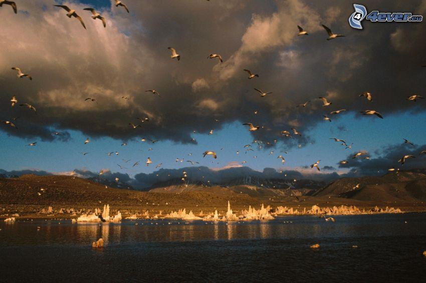 måsar, Mono Lake, moln, bergskedja