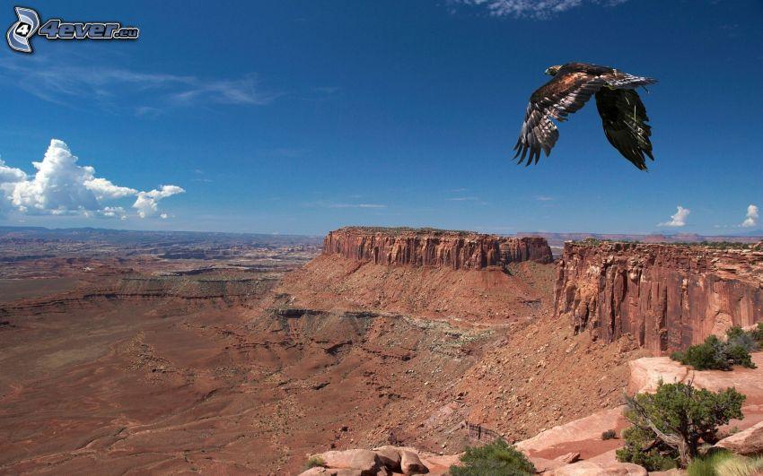 örn, flyg, utsikt över landskap