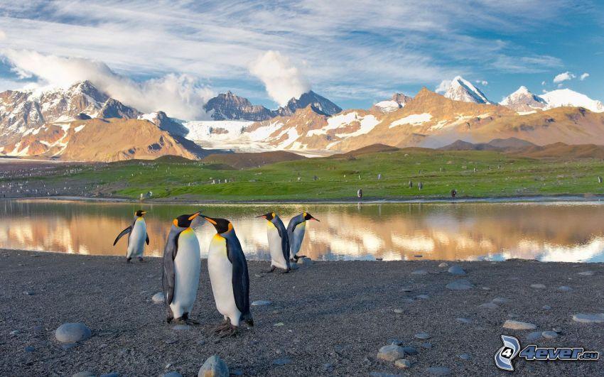 pingviner, sjö, snöklädda berg