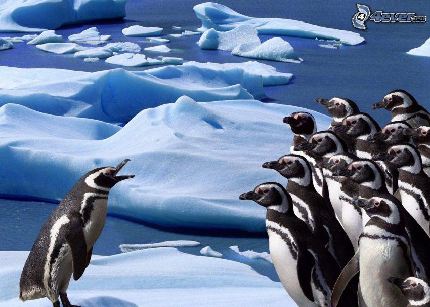 pingviner, snö, vatten, Antarktis