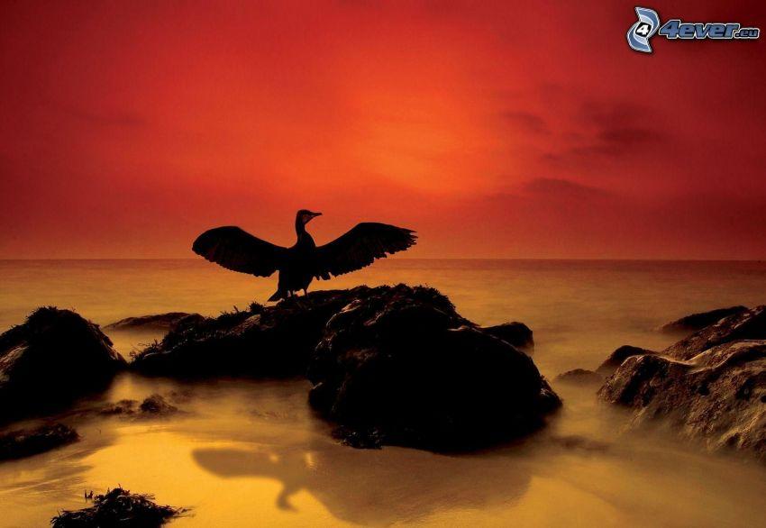 siluett av fågel, klippor i havet, röd himmel