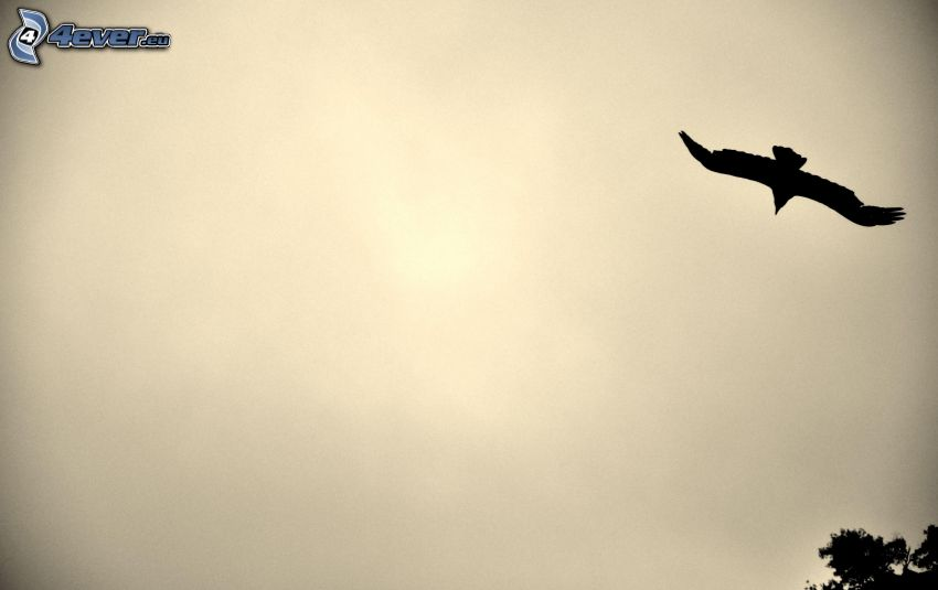 siluett av fågel