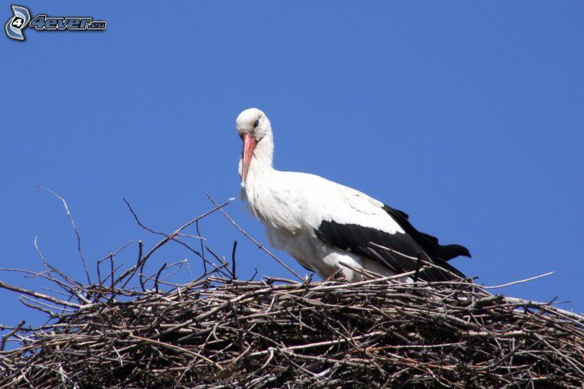 stork, bo