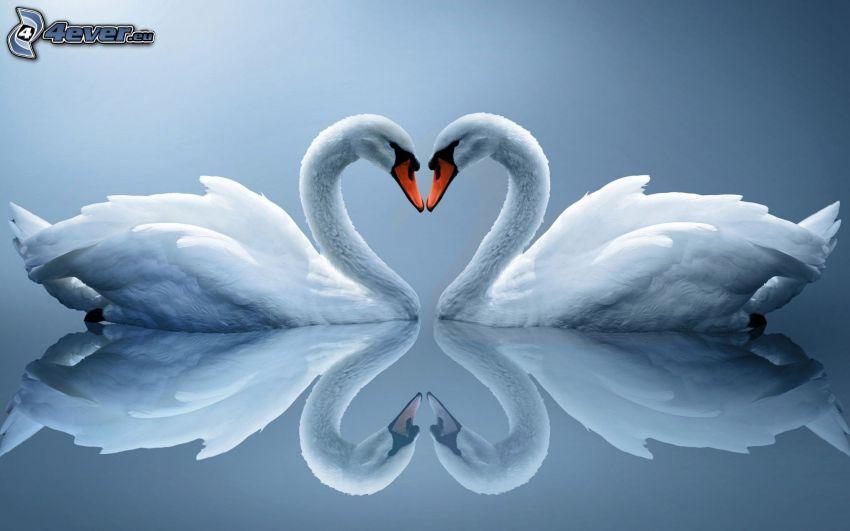 svanar, spegling, hjärtan