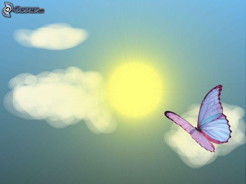 fjäril, sol, moln