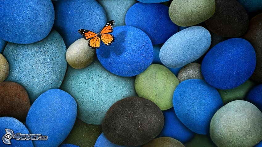 fjäril, stenar