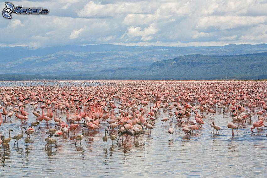 flamingos, Nakuru, bergskedja